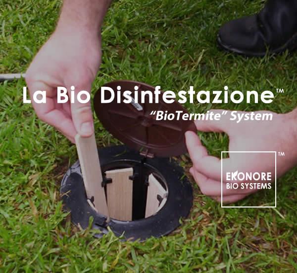 Azienda disinfestazione Roma
