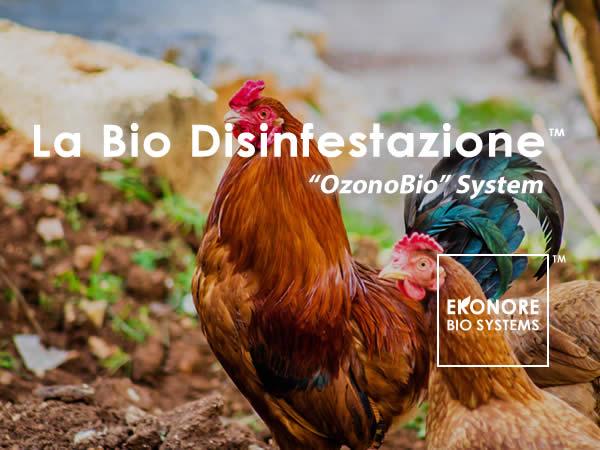 Disinfestazione acaro rosso del pollo a Roma