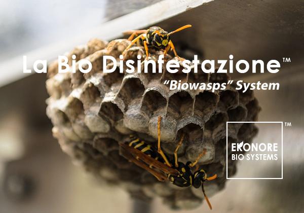 Disinfestazione vespe roma rimozione nidi