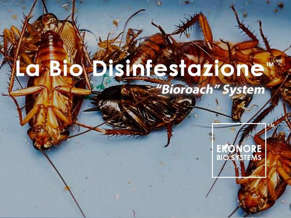Disinfestazioni blatte e scarafaggi roma